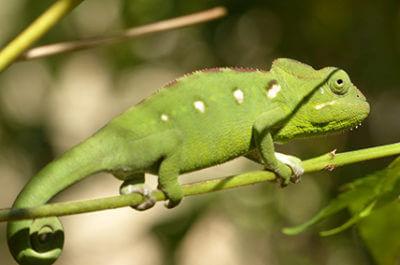 Madagaskar Rundreise