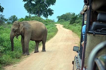 Sri Lanka Abenteuer Rundreise